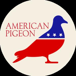 american pigeon